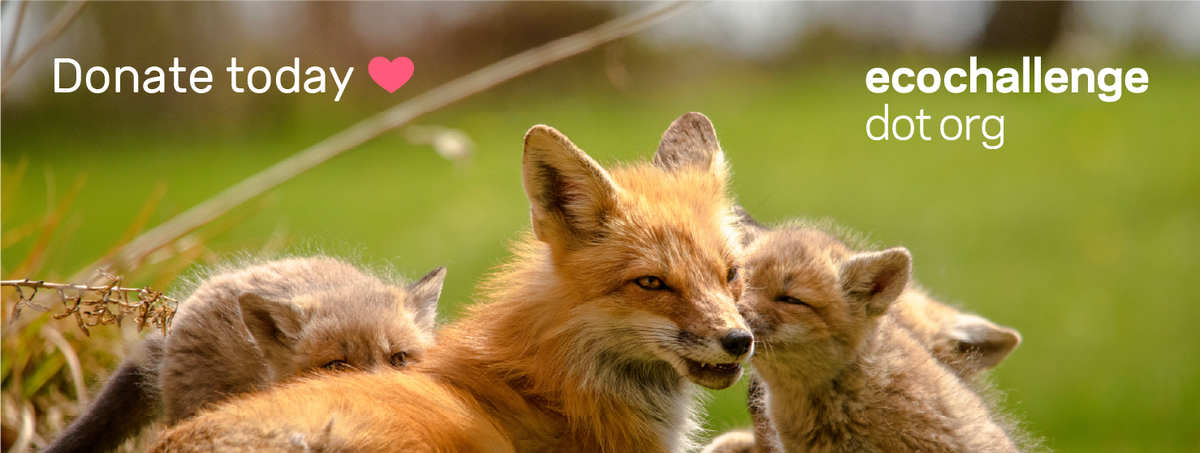 A fox parent snuggled with their kits in a grassy field. Text above reads